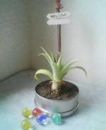 Pine091802